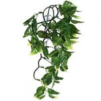 Террариумное растение Hagen Exo Terra AMAPALLO (M)