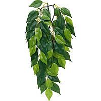 Террариумное растение Hagen Exo Terra FICUS (S)