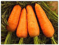 Семена моркови Лосиноостровская