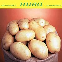 Банба насіннєва картопля овальна рання 1 репродукція ipm potato group 20 кг
