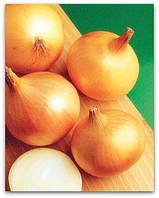 Семена лука  Халцедон весовые