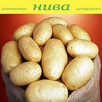 Бюррен насіннєва картопля овальна рання 1 репродукція ipm potato group (5 кг 20 кг)