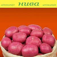 Інфініті насіннєва картопля овальна рання 1 репродукція ipm potato group 20 кг