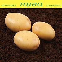 Нектар насіннєва картопля овальна середньорання 2 репродукція ipm potato group (5 кг 25 кг)