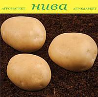 Саванна насіннєва картопля овальна середньостигла 1 репродукція ipm potato group (5 кг 20 кг)