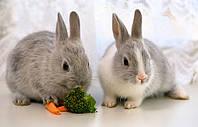 Иммуномодуляторы для кроликов: Альбувир, Аминосол, Роборанте, Гепатоник