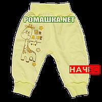 Штанишки на широкой резинке с начесом р. 62 ткань ФУТЕР 100% хлопок ТМ Алекс 3179 Желтый