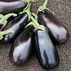 Семена баклажана Классик F1 (Clause) 50 г — ранний (70-75 дней), фиолетовый, вытянуто-овальный