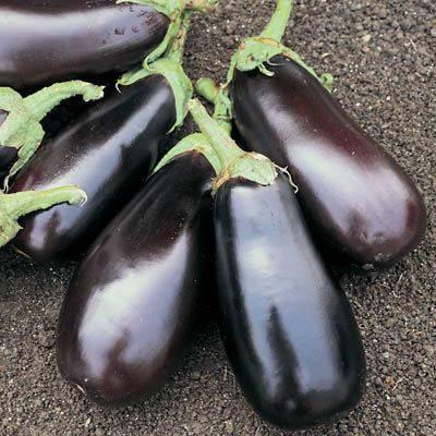 Семена баклажана Классик F1 (Clause) 50 г — ранний (70-75 дней), фиолетовый, вытянуто-овальный, фото 2
