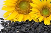 Семена подсолнечника Лиман ОR, 112-115 дней