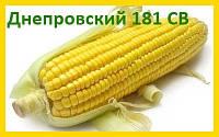 Гибрид кукурузы Днепровський 181 СВ (ФАО 180) - ПСП Колос