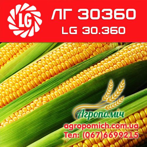 Семена кукурузы ЛГ 30360 LG 30360