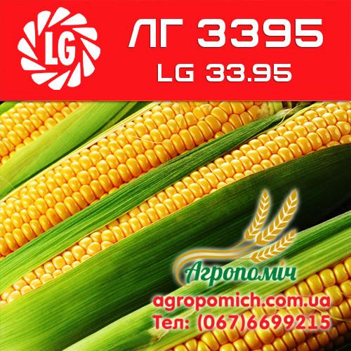 Кукуруза ЛГ 3395 (LG 33.95)