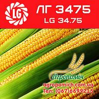 Кукуруза ЛГ 3475 (LG 34.75)