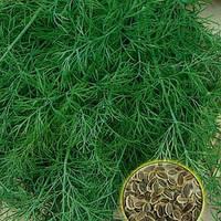 Семена укропа Салют весовые от производителя