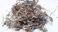 Сушеница топяная трава 100 грамм (сушеница болотная)