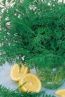 Семена укропа Супердукат весовые