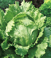 Салат кочанный Галера  5000 семян драже  Nunhems