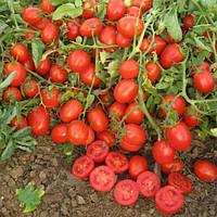 Томат Уно Россо F1 среднеранний высокоурожайный гибрид томата с устойчивостью к заболеваниям