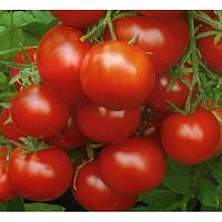 Томат Уракан F1 среднеранний гибрид  кустового томата имеющий хороший потенциал урожайности
