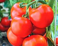 Среднеспелый высокоурожайный гибрид  кустового томата с плодами округло-приплюснутой формы Тайпринц  F1