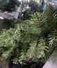 Декоративная хвойная гирлянда (ель) 260х23-33 см, фото 2