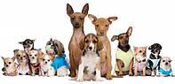 Гостиница для  собак и щенков