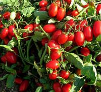 Низкорослые томаты Брисколино F1 ранний гибрид  кустового коктейль томата для цельно плодного консервирования
