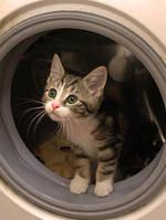 Установка стиральных машин, подключение посудомоечной машины Харьков, фото 1