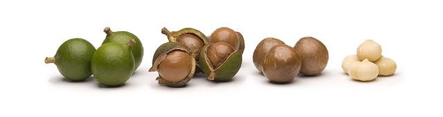 Орех макадамия – польза и полезные свойства