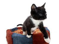 Удаление шерсти,запахов домашних животных с ковров(не более 30%)