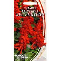 Сальвия блестящая Красный гном /0,2г/(в упаковке 20 пакетов)
