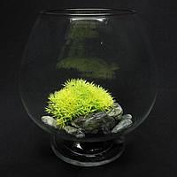 Ваза - бокал, аквариум  5,1 л на низкой ножке