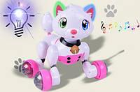 Животное MG012 Кошка