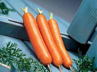 Морква,Дордонь F1, (50000семян), Syngenta, Швейцарія