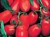 Насіння томату детермінантного, Уліссе F1, (2500семян), Syngenta, Швейцарія