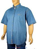 Рубашка мужская джинсовая большого размера Barcotti 0211.02 дж.