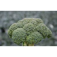 Семена капусты Корос F1 (Clause) 2500 семян - раняя (55-65 дней), брокколи