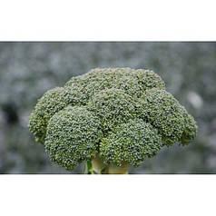 Семена капусты Корос F1 (Clause), 2500 семян — ранняя (55-65 дней), брокколи мин