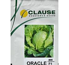 Семена капусты Оракл F1 (Clause) 1000 семян — раняя (55 дней), белокочанная, фото 3