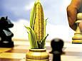 Семена кукурузы СИ Вералия, Сингента, фото 2