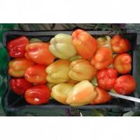 Семена перца ФЛАМИНГО F1, (5 гр.), Clause, Франция