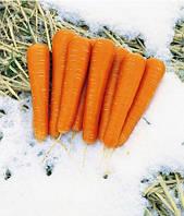 Морковь гибридная тип НАНТЕС (поздняя для хранения и переработки) МАЙОР F1 (100 000сем.), Elitop, Франция