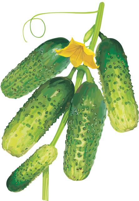 Обработанные семена огурцов ТМ VIA-плюс, Семена ВИА