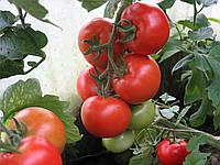 Семена томата Алинди 811 F1 \ Alindi 811 F1 500 семян Enza Zaden