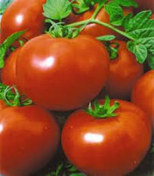 Семена помидора Полфаст F1 5 г семян детерминантный