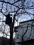 Обрезка деревьев и кустарников. Обрезать деревья Киев.
