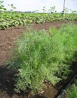 Семена Укроп кустовой Дилл 10 граммов Clause