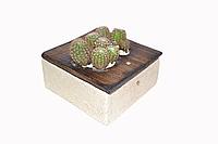 """Интерьерная декоративная рамка-кактусница  + кактусы в форме буквы """"S"""", """"$""""."""