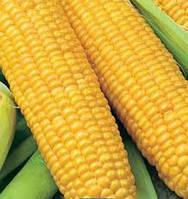 Семена кукурузы СЕ Инберроу ФАО 160 Украина